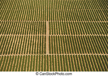 Cropland. - Aerial view of farmland with rows of crops.