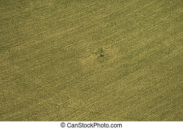 Cropland. - Aerial view of cultivated crop.