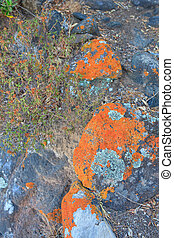 Lichen - Close up of lichen on rock in the countryside,...