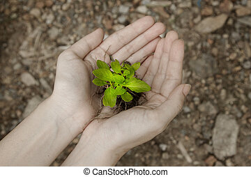 hand holding a fresh young plant.saving new life