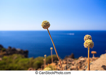 Pantelleria, Sicily - View of countryside flowers in...
