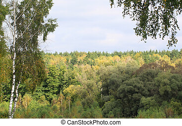Autumn yellow forest green