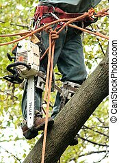Tree maintenance with chainsaw