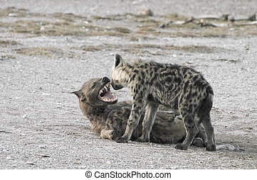 Hyena and puppies