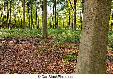 reciclar, símbolo, tallado, árbol
