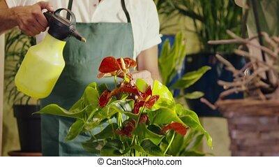 man working in flower shop spraying - mid adult man working...