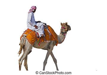 beduíno, camelo, isolado, branca, fundo