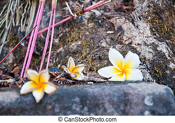 Pagoda flower at Wat Phu Si at Jampasak, Laos