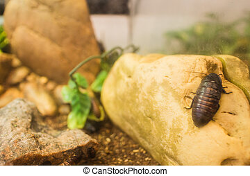 cockroach on a rock - a cockroach on a rock