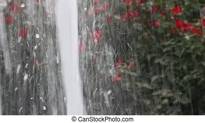 Fountain with water jet and roses - Fountain with water jet...