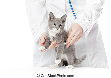 Vet with stethoscope and kitten Isolated on white