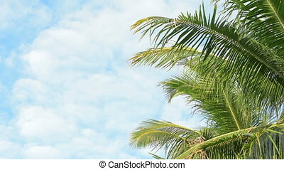 Palm trees fronds swaying - Video 1920x1080 - Palm trees...