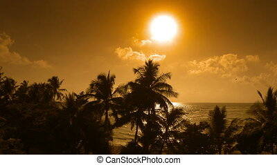 Coconut palm trees silhouettes