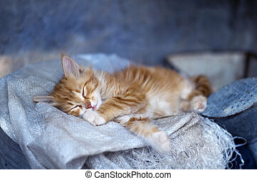 Cat - Adorable sleeping cat