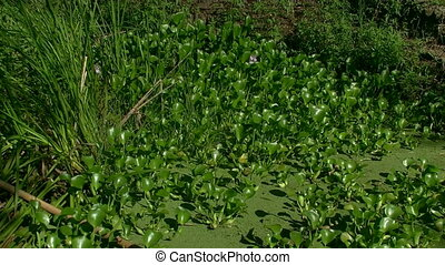plants in the swamp - plants and flowers growing in the...