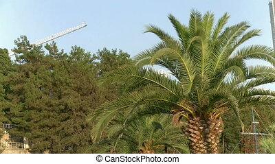 palm - view of a palm tree in Sochi Park