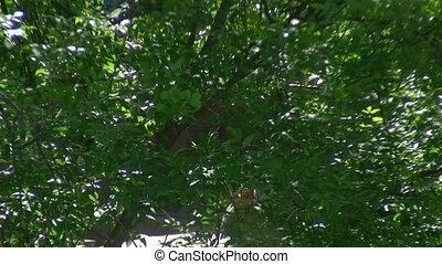 poplar fluff flying against the trees
