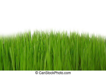 Gras, Wiese - freigestellt mit weiem Hintergrund