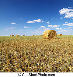 Hay bales in field - Rural field with circular hay bales