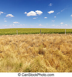 Rural field - Rural field with agricultural crop and barbed...