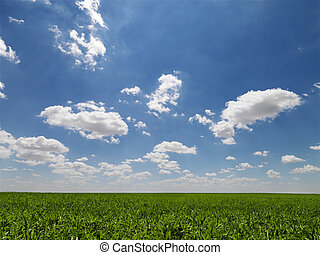 Agricultural field. - Scenic green agricultural field.