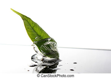 Blatt im Eiswuerfel - Blatt einer Pflanze im Eiswuerfel mit...