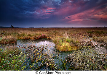 purple sunset over old bog, Fochteloerveen, Netherlands