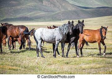 Group of horses looking at camera