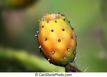 Prickly pear - This is a photo of red prickly pear