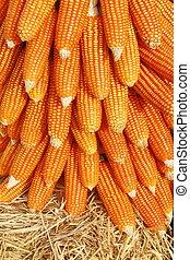 Getreide, hintergrund