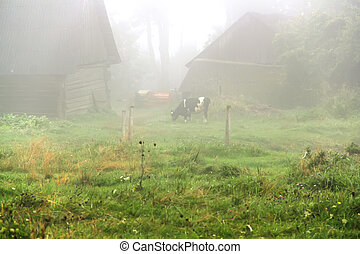 homestead in the fog - Early in the morning next to the...