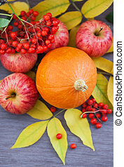 Harvested pumpkin, apples, ashberry and fall leaves around -...