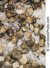 Clams on ice for sale in farmers market - Clams for sale in...