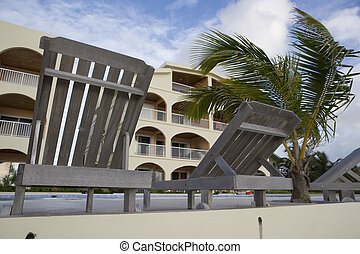 Lounge Chairs & small Palm Tree - Lounge chairs in the...