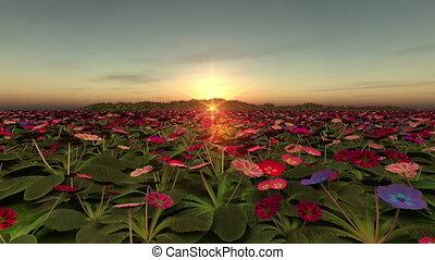 flower garden and horizon