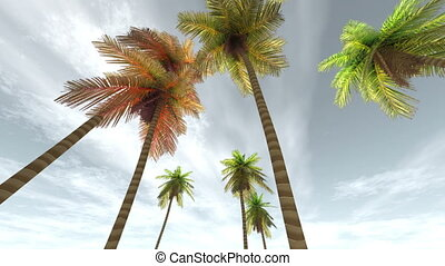 palm trees - image of southern country