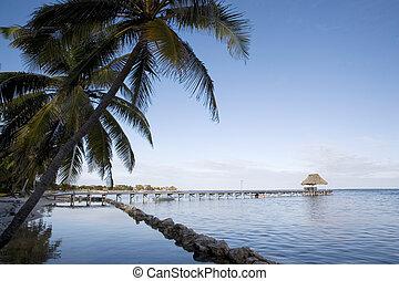Sunrise among the Palms on the Shore - Sunrise along the...