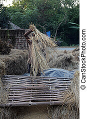 Rice is threshed/winnowed on Dec 02, 2012 in Baidyapur, West...