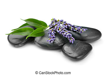 lavender - stones and lavender on the white background