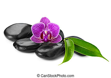 orchid - zen basalt stones and orchid isolated on white