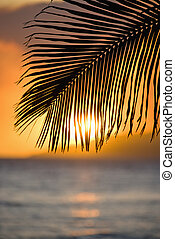 Palm leaf at sunset. - Sunset over ocean with palm frond...