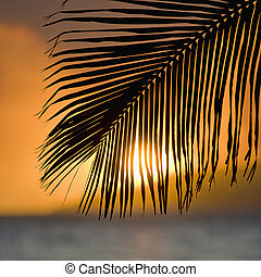 Palm frond sunset. - Palm frond at sunset over ocean and...