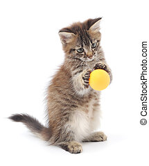 Kitten Playing with Ball - Little kitten playing with balls...
