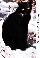 shadow cat in snow - sho of our black cat shadow in the snow...