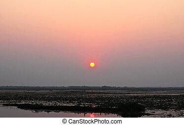 sol, levantamiento, encima, pantano, Tailandia