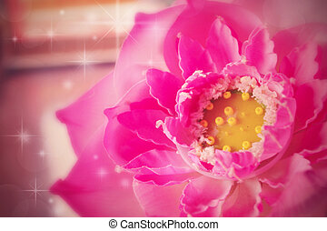 Pink lotus - Pink lotus for background in nature