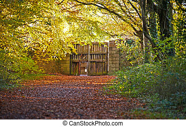 Autumn in the old park  - Autumn footpath in the old park