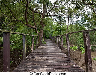 old wood footpath in the  mangrove forest, Thailand