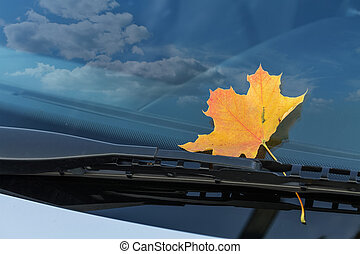 autumn leaf on a car windshield