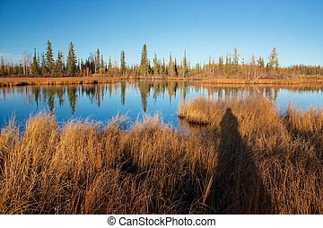 Lake with dry yellow grass and photographer's shadow - Lake...